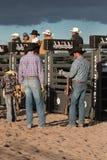 Cowboy Rodeo Bull Riding Stockbild
