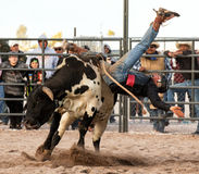 Cowboy Rodeo Bull Riding Royalty Free Stock Images