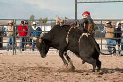 Cowboy Rodeo Bull Riding Royalty Free Stock Photography