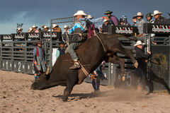 Cowboy Rodeo Bull Riding. Indian cowboy rodeo bull riding in Arizona Royalty Free Stock Photo