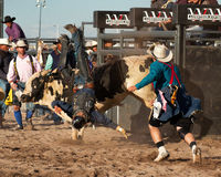Cowboy Rodeo Bull Riding Royalty Free Stock Image