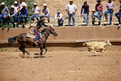 Cowboy roping calf Royalty Free Stock Photo