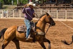 Cowboy Roping a Calf at Rodeo in South Dakota Stock Images