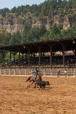 Cowboy Roping a Calf in South Dakota Rodeo Stock Photos