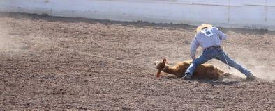 Cowboy roping un veau au rodéo Images libres de droits