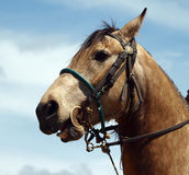 Cowboy's Horse Royalty Free Stock Photography