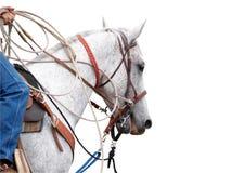 Cowboy's Pony Stock Images