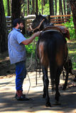 Cowboy Saddles Horse. A man saddles a dark horse with corrals in background.  Forest area. Shallow depth of field Stock Images