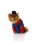 Cowboy senza un cavallo Fotografia Stock Libera da Diritti