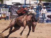 Cowboy som försöker att rymma på till en vildhäst Royaltyfria Bilder