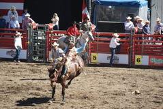 Cowboy som rider den wild hästen. Royaltyfria Bilder