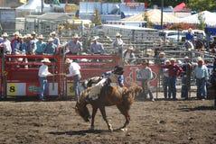 Cowboy som rider den wild hästen Royaltyfria Bilder