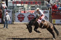 Cowboy som rider den wild hästen Royaltyfri Fotografi