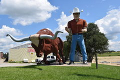 Cowboy and Steer Stock Photography