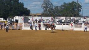 Cowboy sur le cheval Photos libres de droits