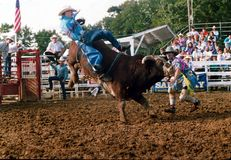 A cowboy is thrown from a bucking bull royalty free stock photos