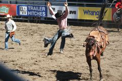 Cowboy thrown from bucking horse. Mid-air as the cowboy lands on feet after being thrown from bucking horse Stock Images