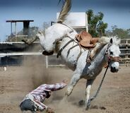 Cowboy thrown from horse