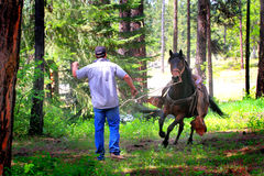 Cowboy Training Running Horse Stock Photography