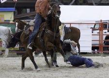 Steer Wrestling Stock Images