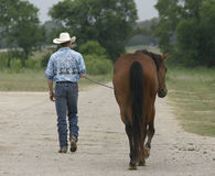 Cowboy walking. A cowboy walks a horse down a road with trees and grass in the background royalty free stock photography