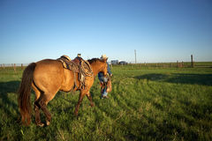 Cowboy walking with his horse across a ranch field. Cowboy walking with his horse trotting behind across a flat open ranch field at sunset or sunrise in golden Royalty Free Stock Photography