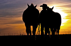 Cowboy Walking With Horses royalty free stock photos