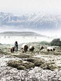 Cowboy watching the herd in winter stock images
