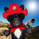 Cowboy western sheriff dog. Western cowboy sheriff french bulldog dog with rope , red scarf and pistol outside in the desert, wearing red american hat stock photos