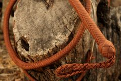 Cowboy Whip Curled Around Tree Trunk Images stock