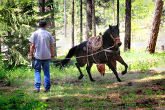 Cowboy Working Running Horse Fotografie Stock Libere da Diritti
