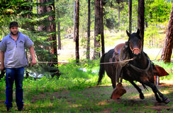 Cowboy Working Running Horse Royalty Free Stock Photography