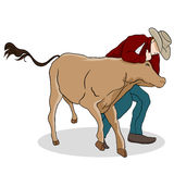 Cowboy Wrangling a Calf Stock Image