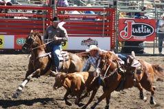 Cowboybanhoppning ut som ner tar steeren Fotografering för Bildbyråer