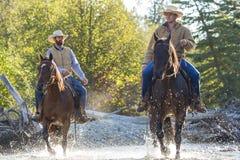 Cowboyer & hästar arkivbild