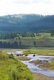 Cowboyer i den Yellowstone nationalparken Royaltyfri Fotografi