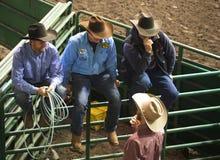 Cowboyer som håller ögonen på kalvtågvirke Arkivbild