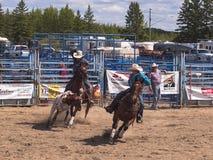 Cowboyes som försöker till unga Angus lasso Royaltyfri Bild