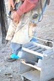 Cowboyfarrier het werken Royalty-vrije Stock Afbeelding
