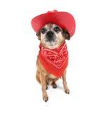 Cowboyhund Stockfoto