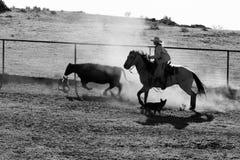 Cowboyliv Royaltyfria Foton