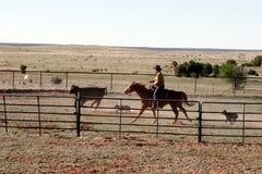Cowboyliv Arkivbild