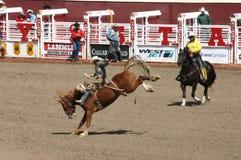 Cowboyreitsträubendes wildes Pferd stockfotografie