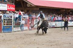 Cowboyritter som sparkar bakut tjuren på rusningen Arkivfoton