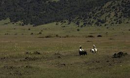 cowboys fotografie stock