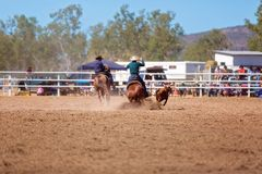 Team Calf Roping At A Country Rodeo stock image