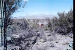 Cowboys, die durch Grasland galoppieren stock video footage