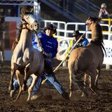 Cowboys, die mit wilden Broncs ringen Stockfotos