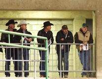 Cowboys die op Kalf Roping letten Royalty-vrije Stock Foto's