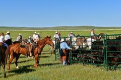 Cowboys et cow-girl dans un rassemblement et une scène de marquage à chaud Photos stock